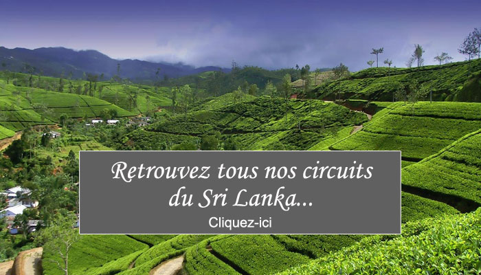 circuits-sri-lanka