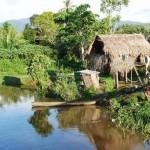 La forêt primaire de Panama