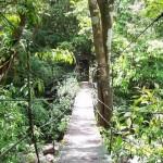 Forêt primaire du Panama